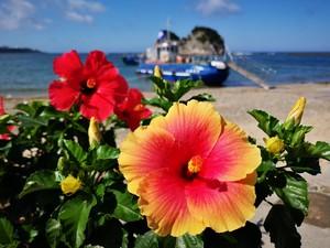 季節の花々✿