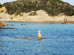 円月島前の棒杭には毎年カモメがひと休みしにきます