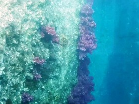 台風によって海底には様々なものが流れて、そして朽ちていきます。
