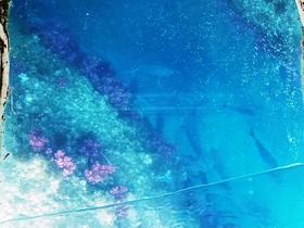 魚の楽園 青の世界