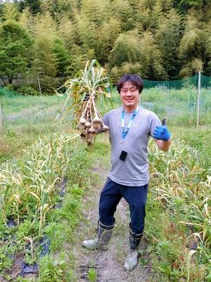 にんにくの収穫☆