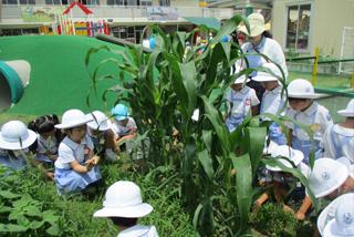 幼稚園の農園