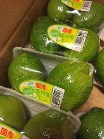 【大阪産】レモン