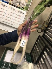 奈良産 日野菜