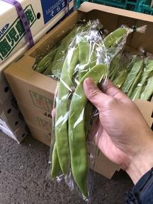 熊本産 ジャンボインゲン