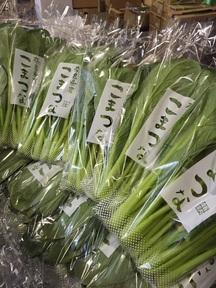 【奈良薮内農園】小松菜