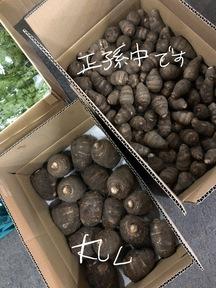 静岡遠州中央産 海老芋