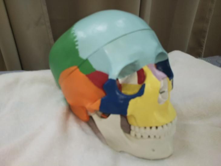 頭蓋骨矯正 クラニアル