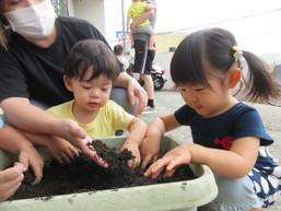 秋野菜の苗植え